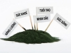 The value of spirulina What is spirulina?